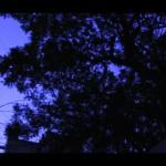 Video Still 19